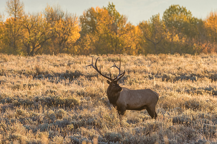 7 Awesome Destinations for Autumn Elk Hunting