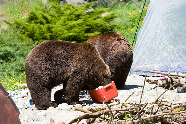 Watch: How bear-resistant is your camping equipment?