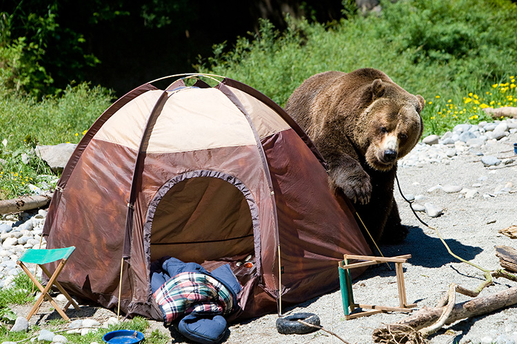 Watch: 6 Hilariously Awesome Camping Fails