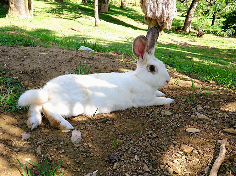 WATCH: Bunny loves playing in the leaves!