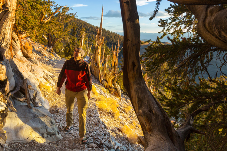 5 Stunning Foliage Hikes in California