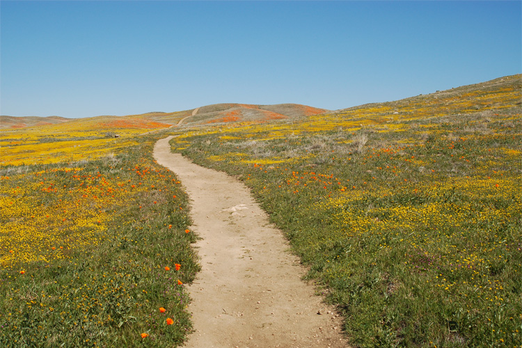 SPOTLIGHT: Things to Do in and Around Antelope Valley California Poppy Reserve