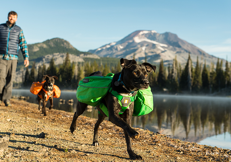 How to Keep Your Dog Safe While Hiking