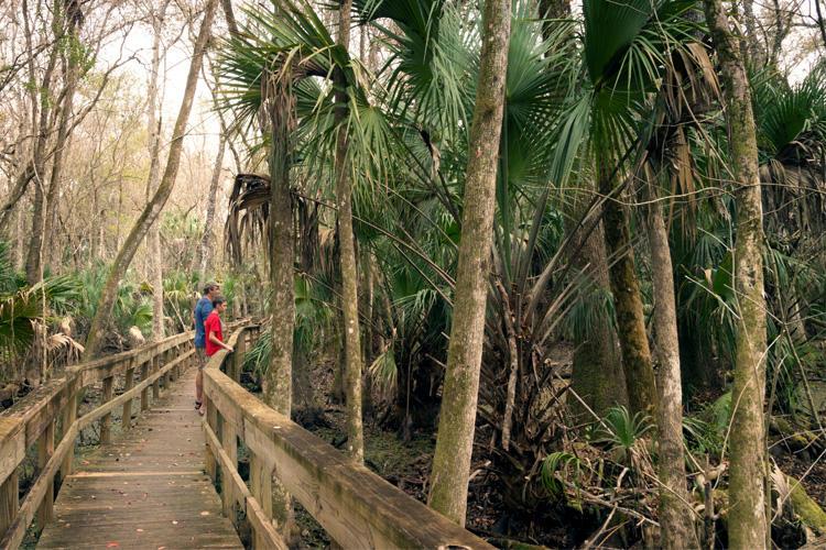 Making the Most out of Highlands Hammock State Park