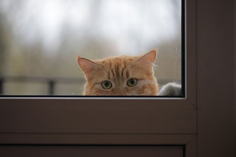 WATCH: Frantic cat just wants to get inside