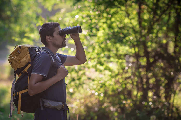 5 Best Birdwatching Hikes in Indiana
