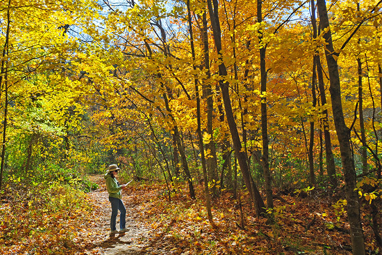 5 Stunning Foliage Hikes in Indiana
