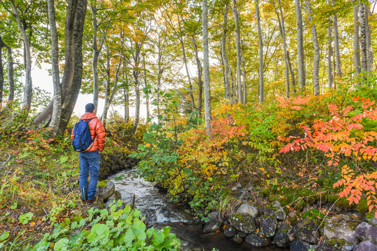 5 Stunning Foliage Hikes in Maine