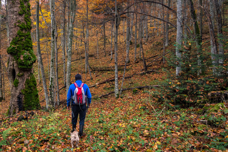 5 Stunning Foliage Hikes in Minnesota