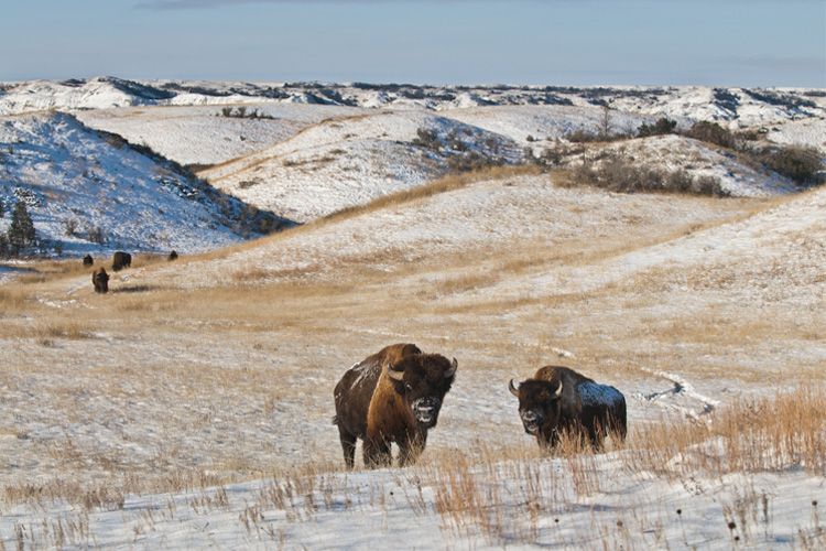 Best Winter Weekend Getaway in Theodore Roosevelt National Park