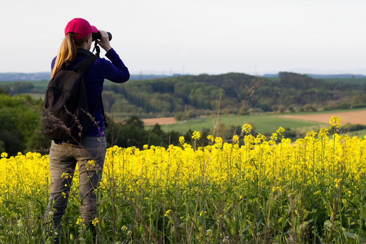 5 Best Birdwatching Hikes in Ohio