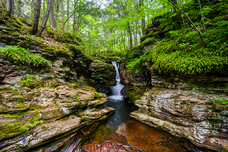 The Ultimate Guide to Beginner Hiking in Pennsylvania