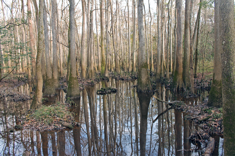 Best Winter Weekend Getaway in Congaree National Park