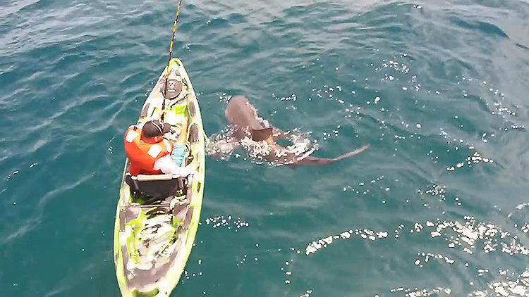 WATCH: Man vs. shark in a true test of will