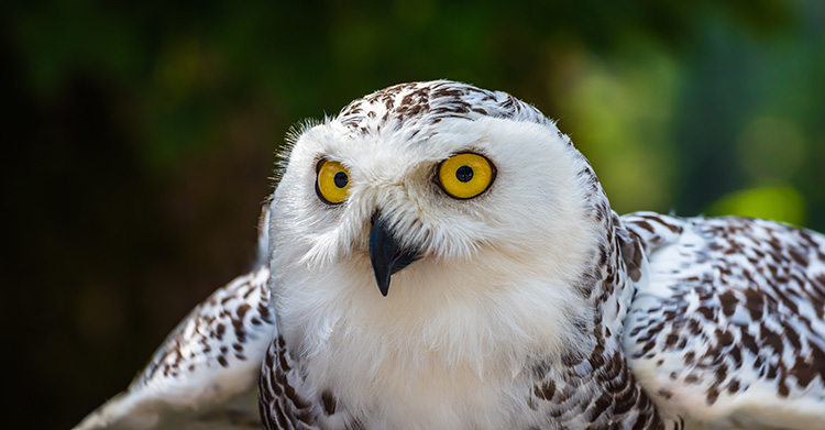 WATCH: Snowy owl takes on a red fox