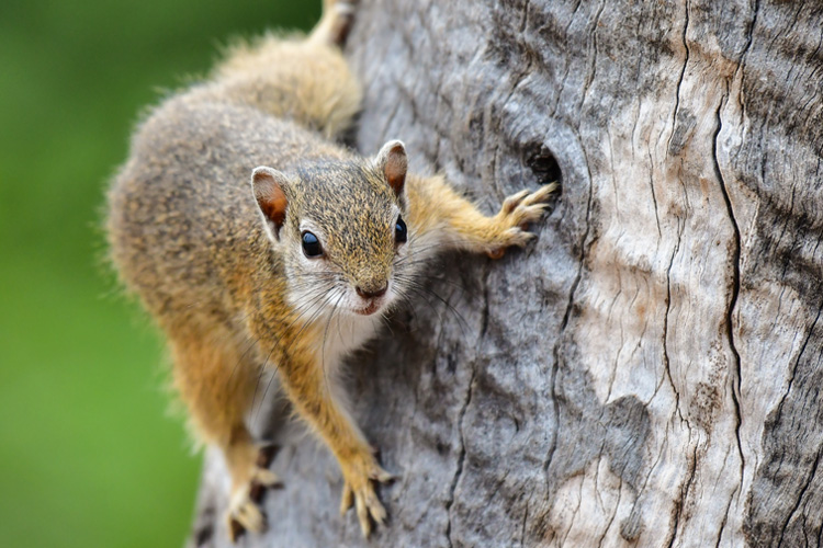 Why You Need To Be Hunting Squirrels Right Now