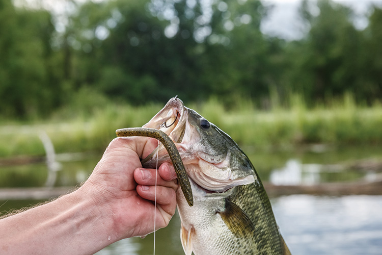 How to Catch Bass on Summer's Hottest Days