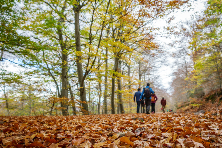 5 Stunning Foliage Hikes in Tennessee