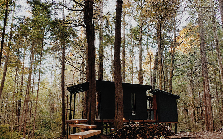 10 Stunning Treehouse Camping Destinations on Airbnb