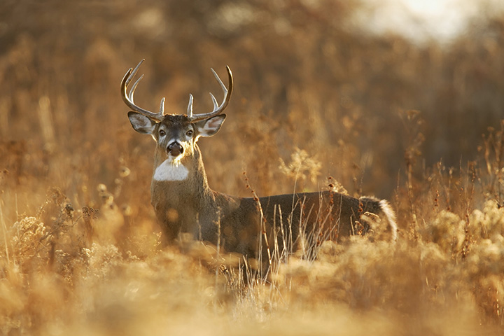 10 Best Guided Hunting Experiences in the U.S.