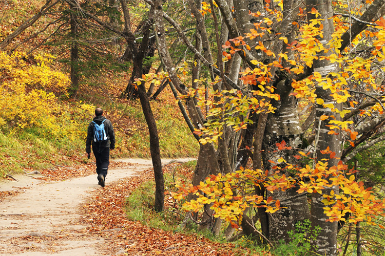 5 Stunning Foliage Hikes in Virginia