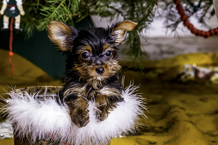 WATCH: Cute pup can't wait to open everyone's gifts!